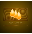 Spa themed design using golden line curve a vector image