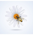 Bee with flower vector image
