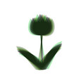 tulip sign colorful icon shaked with vector image