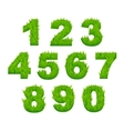 Grass numbers and digits vector image