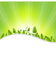 Green Leaves With Sunburst vector image