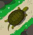 Crawling tortoise vector image