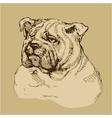 Bulldog head - hand drawn -sketch in vintage style vector image