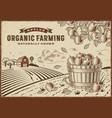apple organic farming landscape vector image