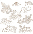 Set of Outline hand drawn berries blackberry vector image