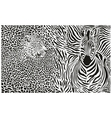 Background with leopard and zebra vector image vector image