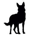 German Shepherd Silhouette vector image