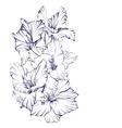 floral blooming gladiolus hand drawn vector image
