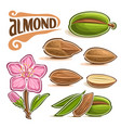 set of almond nuts vector image