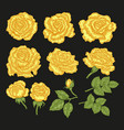 big set with yellow rose flowers and leaves in vector image