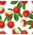 seamless pettern with rambutan isolated on white vector image vector image