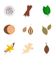 spices and herbs icon set flat style vector image