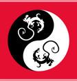 dragon the yin yang vector image