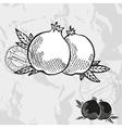 Hand drawn decorative pomegranate fruits vector image