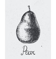 hand drawn pear engraving style hand vector image