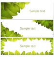 Green leaves banners set vector image