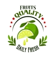 Organic shop or farm badge with fresh lime fruits vector image