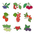 colored graphic natural food set vector image