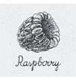 hand drawn raspberry engraving style hand vector image