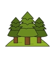 Isolated pine trees design vector image
