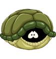 tortoise shell vector image