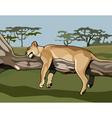cartoon lion sleeping on a tree vector image
