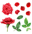 Rose Flower And Petals Set vector image vector image
