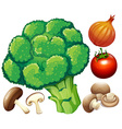 Many fresh vegetables on white vector image
