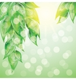 Green leaves on colorful background vector image