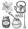 ink hand drawn sketch style yerba mate tea vector image