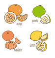 colored drawing citrus fruits collection vector image