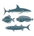 Predator Fish vector image