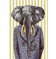 elephant in jacket vector image