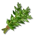Bunch of herbs on a white background food concept vector image