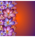 Crocus background vector image