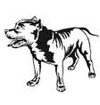 Decorative standing portrait of american pit bull vector image
