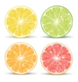 citrus fruits vector image