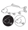 fish carp vector image