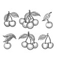 cherry sketch icons set vector image
