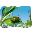 nature illustration vector image vector image