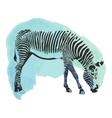 Colorful watercolor zebra cover vector image