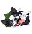 Happy Boston Terrier vector image