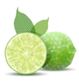 fresh lime vector image