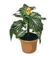 Decorative yellow flower in pot flowers isolated vector image vector image
