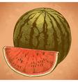 engraving watermelon and slice retro vector image vector image