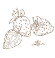 Outline hand drawn strawberry flat style t vector image