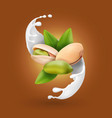 Pistachio nuts in milk splash ice cream or yogurt vector image