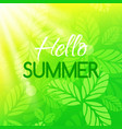 hello summer card banner with typographic design vector image
