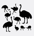 ostrich bird poultry animal silhouette vector image