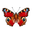 Peacock butterfly Hand drawn vector image